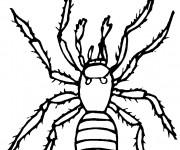Coloriage et dessins gratuit Araignée domestique à imprimer