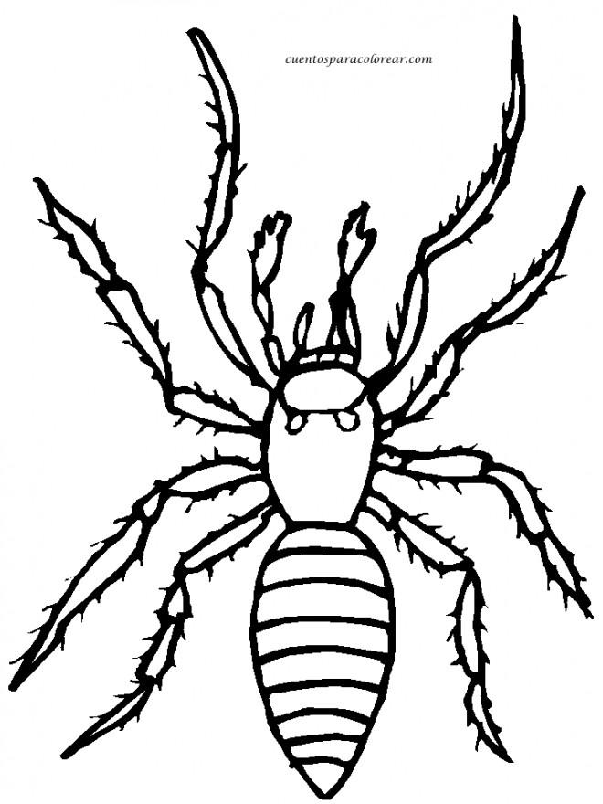 Coloriage et dessins gratuits Araignée domestique à imprimer