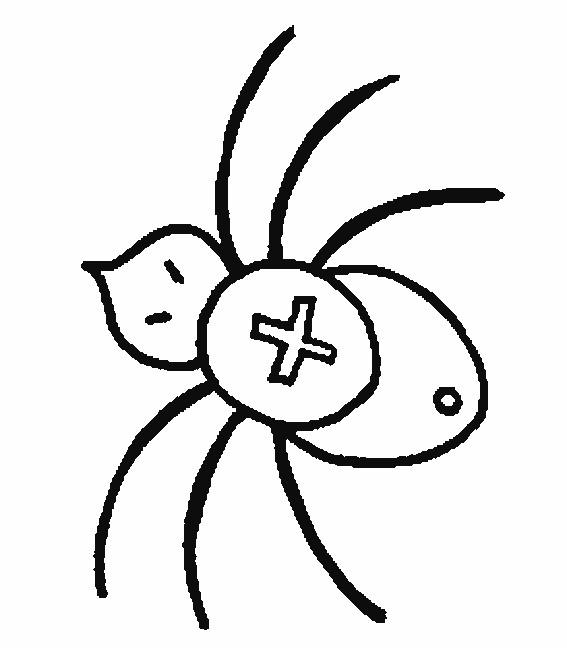 Coloriage et dessins gratuits Araignée en croix à imprimer