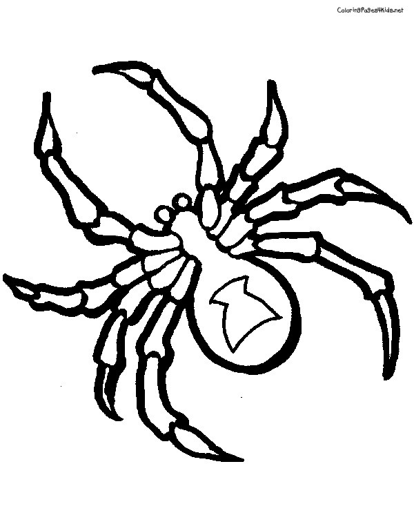 Coloriage Araignée En Noir Et Blanc Dessin Gratuit à Imprimer