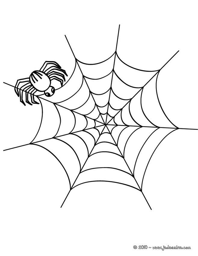 Coloriage et dessins gratuits Araignée et sa toile pour enfant à imprimer