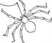 Coloriage et dessins gratuit Araignée et son fil à décorer à imprimer