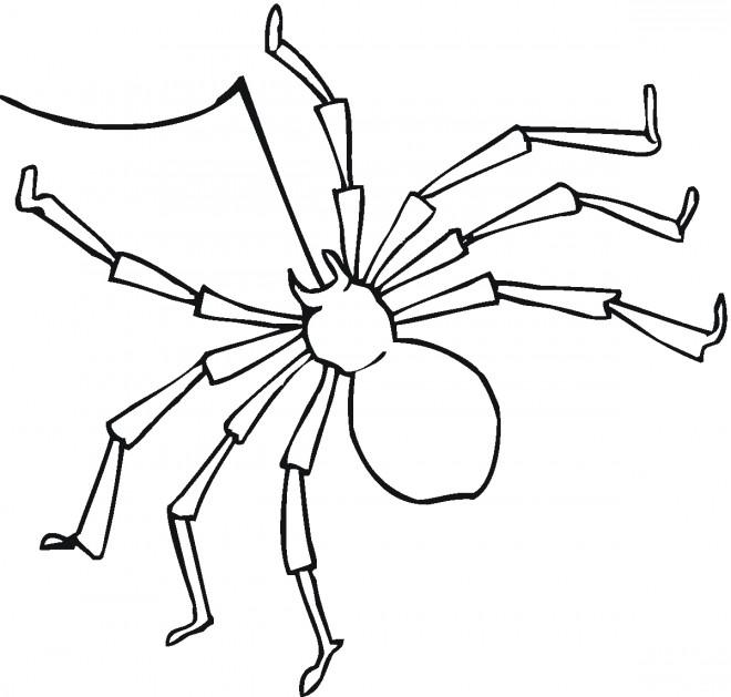 Coloriage et dessins gratuits Araignée et son fil à décorer à imprimer