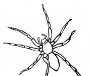 Coloriage et dessins gratuit Araignée facile à imprimer