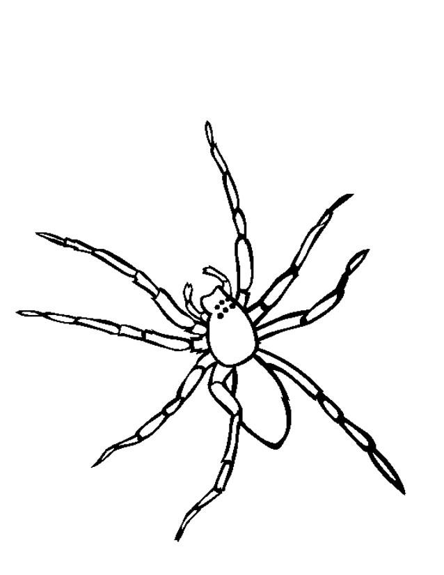 Coloriage et dessins gratuits Araignée facile à imprimer