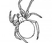 Coloriage Araignée insecte