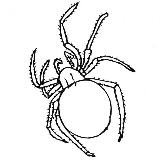 Coloriage et dessins gratuits Araignée insecte à imprimer