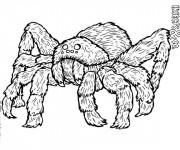 Coloriage Araignée insecte dangereuse