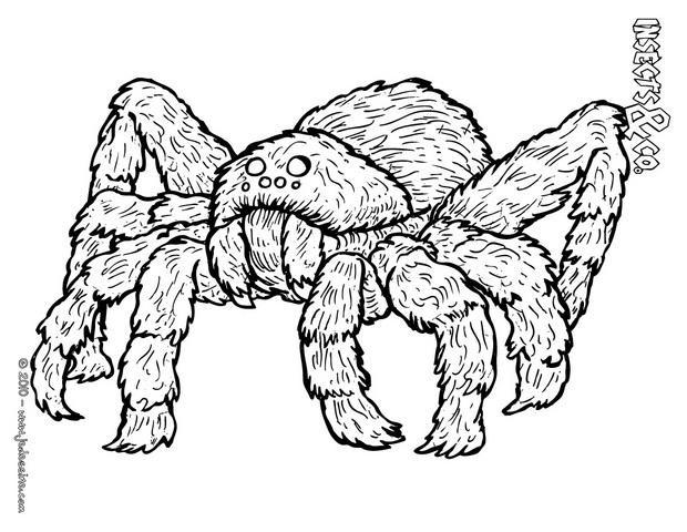 Coloriage et dessins gratuits Araignée insecte dangereuse à imprimer