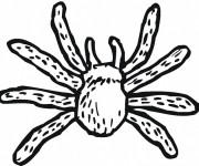 Coloriage Araignée noire