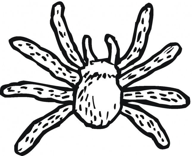 Coloriage Araignée Noire Dessin Gratuit à Imprimer