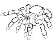 Coloriage et dessins gratuit Araignée  qui fait peur à imprimer