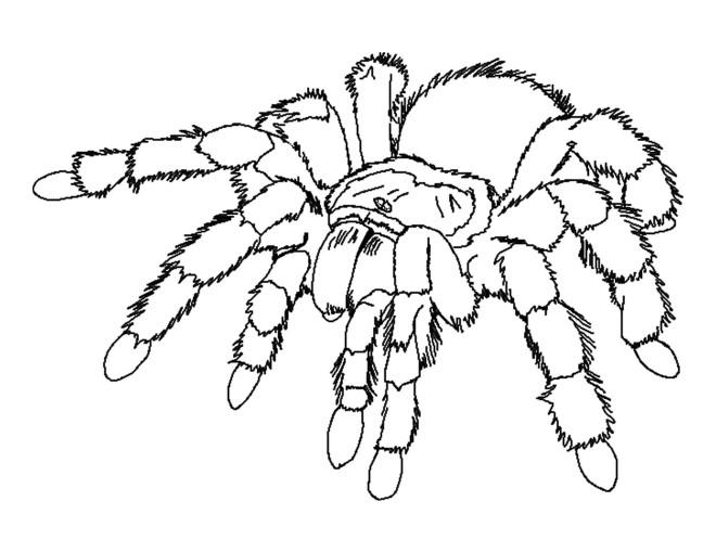 Coloriage et dessins gratuits Araignée  qui fait peur à imprimer