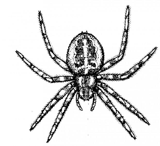 Coloriage araign e r aliste dessin gratuit imprimer - Araignee dessin ...