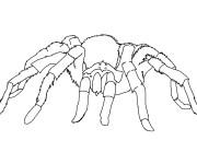 Coloriage Araignée se déplace