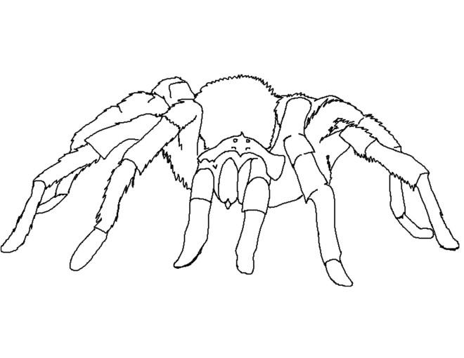 Coloriage et dessins gratuits Araignée se déplace à imprimer