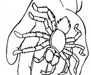 Coloriage Araignée sur la main