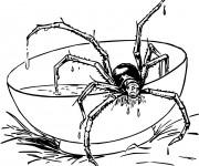 Coloriage Araignée sur la Table