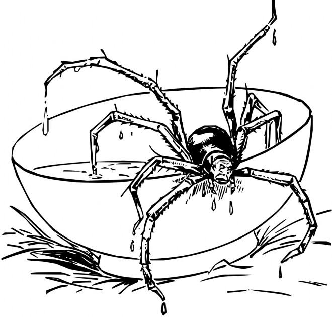 Coloriage et dessins gratuits Araignée sur la Table à imprimer