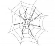 Coloriage Araignée sur la toile en blanc