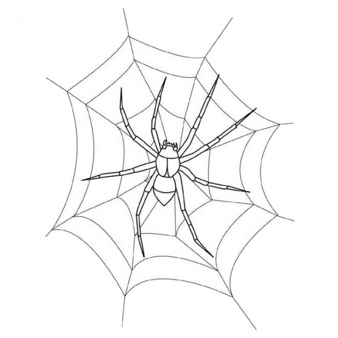 Coloriage et dessins gratuits Araignée sur la toile en blanc à imprimer