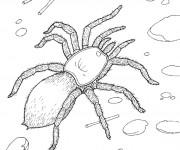 Coloriage Araignée sur le sol