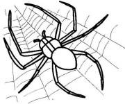 Coloriage Araignée sur Toile Insecte prédateur
