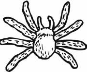 Coloriage et dessins gratuit Araignée Tarantule à imprimer
