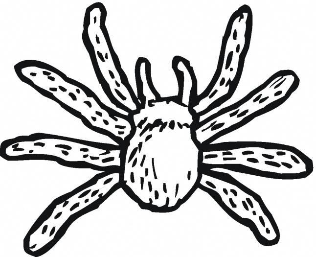 Coloriage et dessins gratuits Araignée Tarantule à imprimer