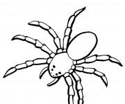 Coloriage et dessins gratuit Araignée terrestre à imprimer