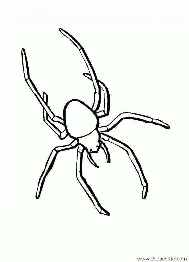 Coloriage et dessins gratuits Araignée vecteur à imprimer