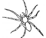 Coloriage Araignée vue de face