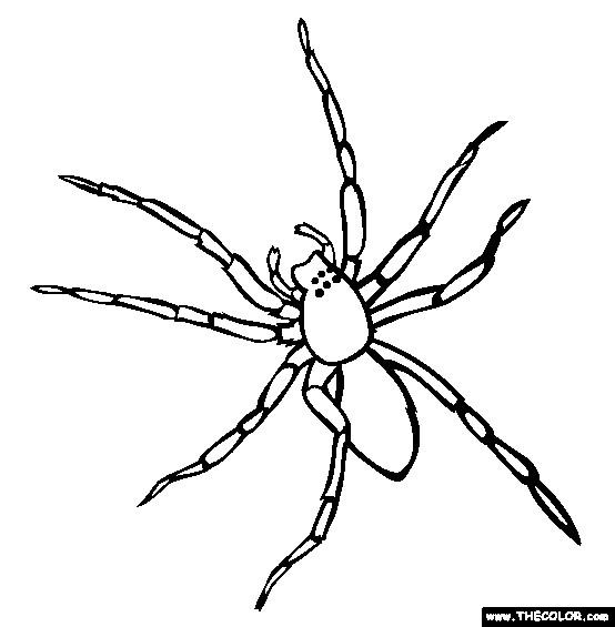 Coloriage et dessins gratuits Araignée vue de face à imprimer