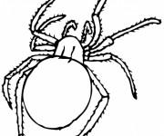 Coloriage L'insecte Araignée