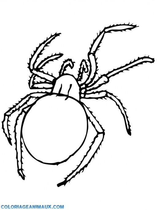 Coloriage et dessins gratuits L'insecte Araignée à imprimer
