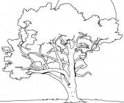 Coloriage et dessins gratuit Arbre couleur à imprimer