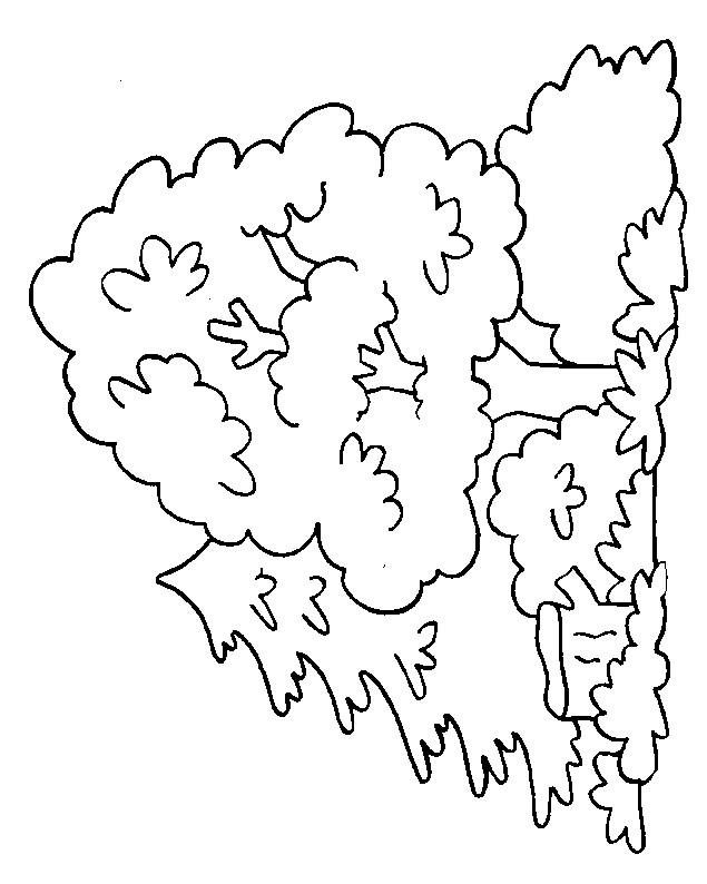 Coloriage et dessins gratuits Arbre dans la forêt à imprimer