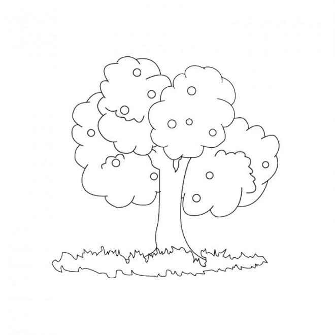 Coloriage arbre fruitier d corer dessin gratuit imprimer - Coloriage pommier ...