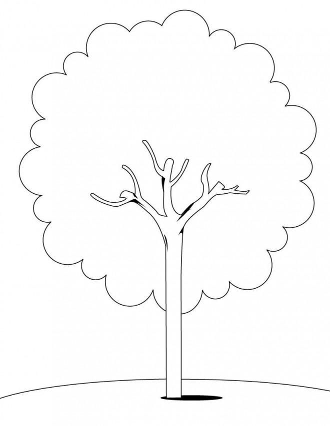 Coloriage et dessins gratuits Arbre maternelle à imprimer