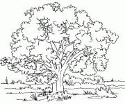 Coloriage et dessins gratuit Arbres 11 à imprimer