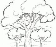 Coloriage et dessins gratuit Arbres 4 à imprimer