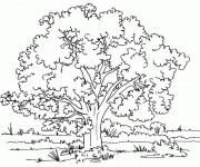 Coloriage et dessins gratuit Arbres et Nature à imprimer