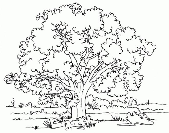 Coloriage et dessins gratuits Arbres et Nature à imprimer