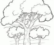 Coloriage et dessins gratuit Arbres vecteur à imprimer
