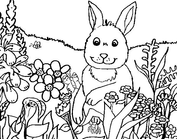 Coloriage et dessins gratuits Lapin à la Campagne à imprimer