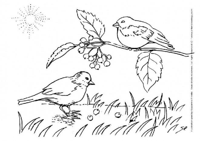 Coloriage les oiseaux chantent la campagne - Dessiner un paysage ...