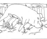 Coloriage Porc en Campagne