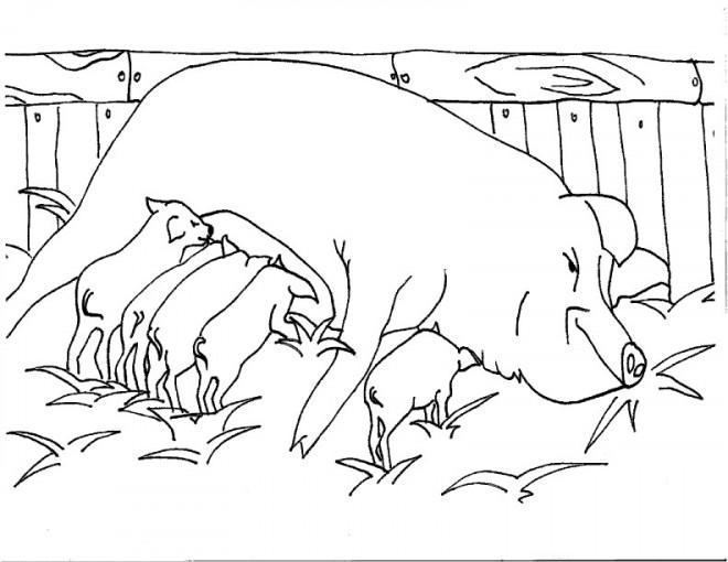 Coloriage et dessins gratuits Porc en Campagne à imprimer