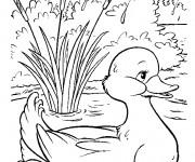 Coloriage dessin  Canard 26