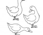 Coloriage Canard animaux de la ferme